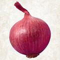 Red Onion  by Danny Smythe