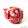 Red Onion by Vivian Frerichs