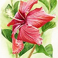 Red Orange Hibiscus by Sharon Freeman