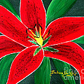 Red Oriental Daylily by Barbara Griffin