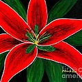Red Oriental Lily by Barbara Griffin