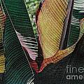 Red Palm Leaves by Nadalyn Larsen