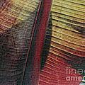 Red Palm by Nadalyn Larsen