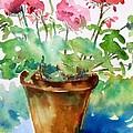 Red Pelargonium  by Trudi Doyle