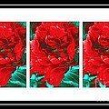 Red Peony Triptych by Barbara Griffin