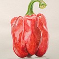 Red Pepper by Kaos Handlon