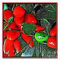 Red Pepper Plant by Joan  Minchak