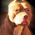 Red Pit Bull By Spano by Michael Spano