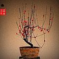 Red Plum Blossoms by GuoJun Pan