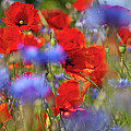 Red Poppies In The Maedow by Heiko Koehrer-Wagner