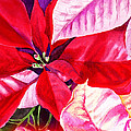 Red Red Christmas by Irina Sztukowski