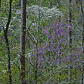 Red River Gorge Spring  by Nicholas Hall
