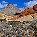 Red Rock Canyon Nevada by Venetia Featherstone-Witty