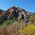 Red Rock Canyon With Foliage by Judy Vincent