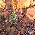 Red Rock Christmas by Marlene Rose Besso