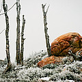 Red Rock Frost - Green Mountain - Wyoming by Diane Mintle