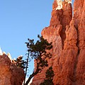 Red Rocks Of Bryce Canyon  by Christiane Schulze Art And Photography