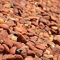 Red Rocks by Stephanie Guinn