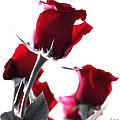 Red Rose Color Block 2 by Joseph Hedaya