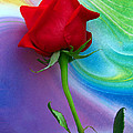 Red Rose Delight by Scott Witte