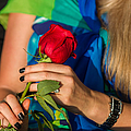 Red Rose - Featured 3 by Alexander Senin