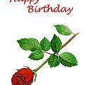 Red Rose Happy Birthday  by Irina Sztukowski