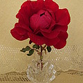 red rose III by Zina Stromberg