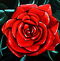 Red Rose In Black And White by Jean Kieffer