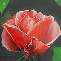 Red Rose Study by Kathy Spall