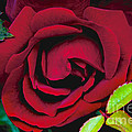 Red Rose by William Norton