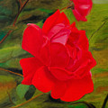 Red Rose With Bud by Laurie Donophan-Dart