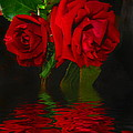 Red Roses Reflected by Joyce Dickens