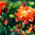 Red Roses by Sergey Lukashin