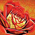 Red Rosey by David Davies