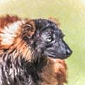 Red-ruffed Lemur by Liz Leyden