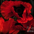 Red Ruffles by Kathleen Struckle
