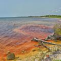 Red Sea  by Salvador Penaloza