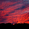 Red Sky At Night by Greg Fortier