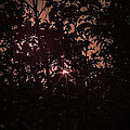 Red Sky by Teri  Kimbro