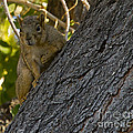 Red Squirrel   #1733 by J L Woody Wooden
