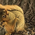 Red Squirrel by Bonfire Photography