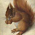 Red Squirrel  by Hans Hoffmann