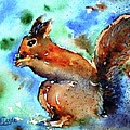 Red Squirrel  by Trudi Doyle