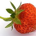 Red Strawberry With Stem by Iris Richardson