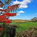 Red Sumac Field by MTBobbins Photography