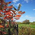 Red Sumac Tree by MTBobbins Photography