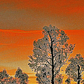 Red Sunset With Trees by Ben and Raisa Gertsberg