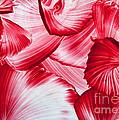 Red Swirls Background by Simon Bratt Photography LRPS