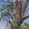 Red Tail Hawk by Michael Ashmen