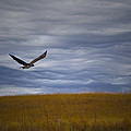 Red Tail Hawk Over The Prairie by Shelly Gunderson